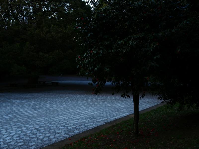 f0175998_133927.jpg