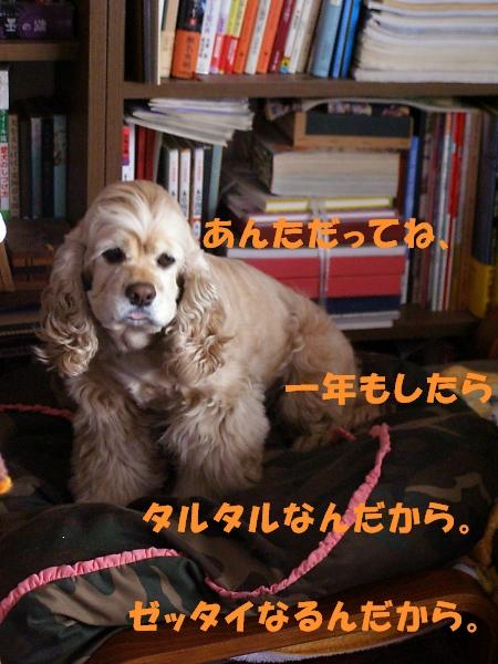 b0067012_21411263.jpg