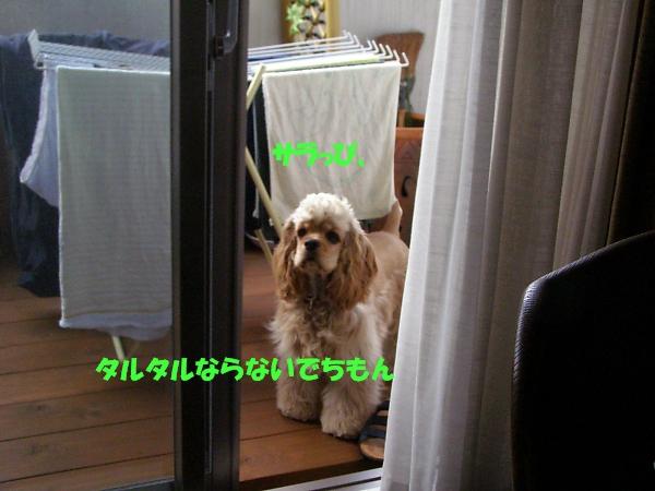 b0067012_21424341.jpg