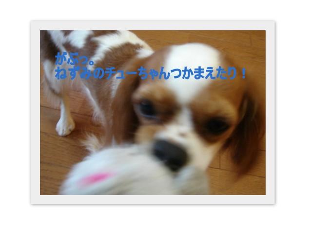 f0214121_9562132.jpg