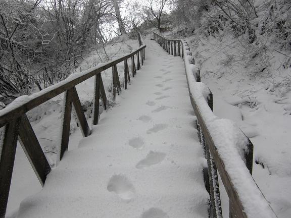 山が白くなっている~  英彦山へ_e0164643_21434952.jpg