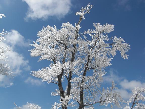 山が白くなっている~  英彦山へ_e0164643_2149584.jpg