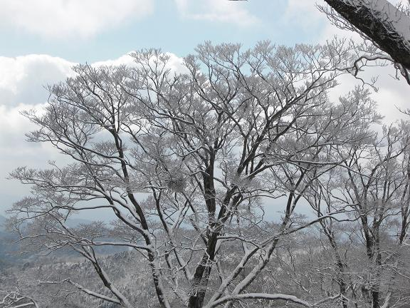 山が白くなっている~  英彦山へ_e0164643_2149975.jpg