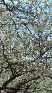 春の気配_c0202046_22471042.jpg