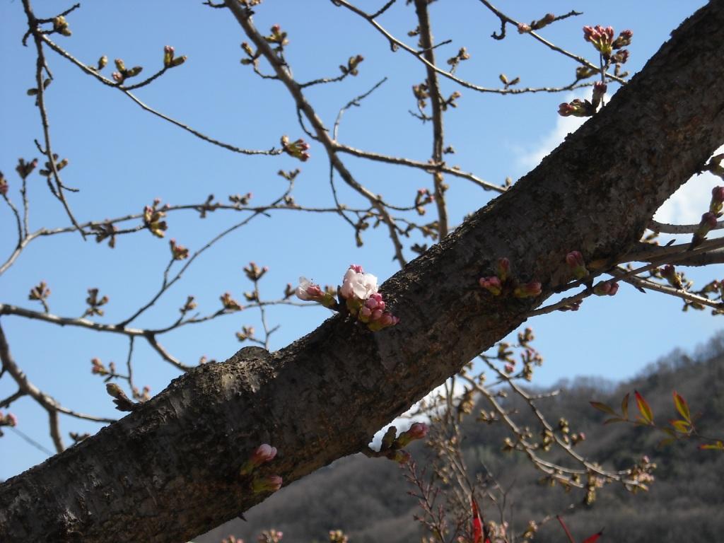 桜_f0184247_1947489.jpg