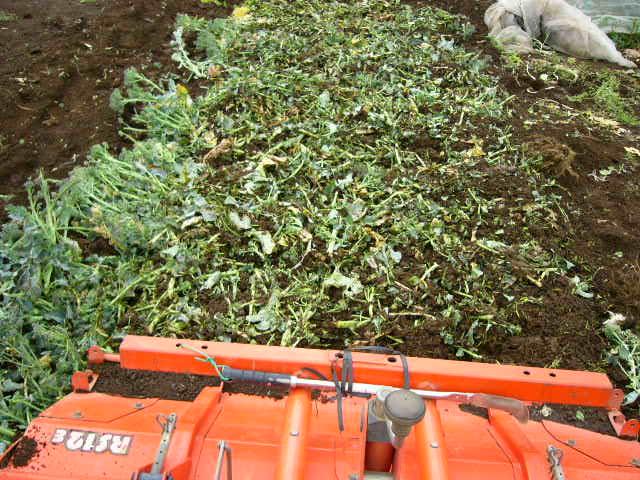 抜いた収穫時期を過ぎたキャベツ&レタス、菜の花・・メキャベツ、ブロッコリーを抜き トラクターで粉砕_c0222448_1453648.jpg