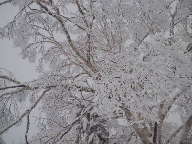 苗場の樹氷_c0151965_16254386.jpg