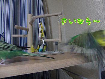 f0196665_0172688.jpg