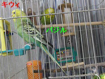 f0196665_23251084.jpg