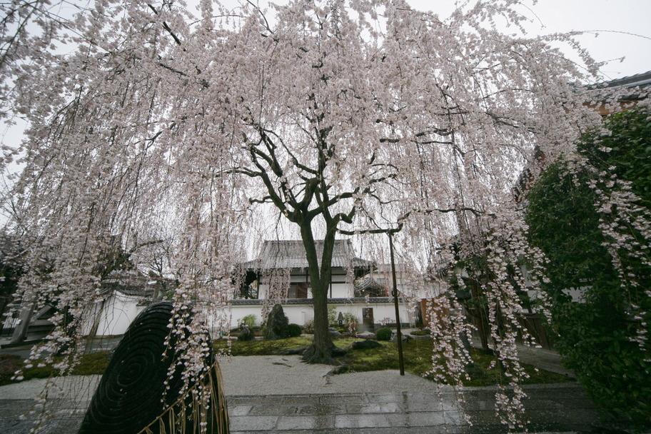 京都 本満寺  1_f0021869_21161499.jpg