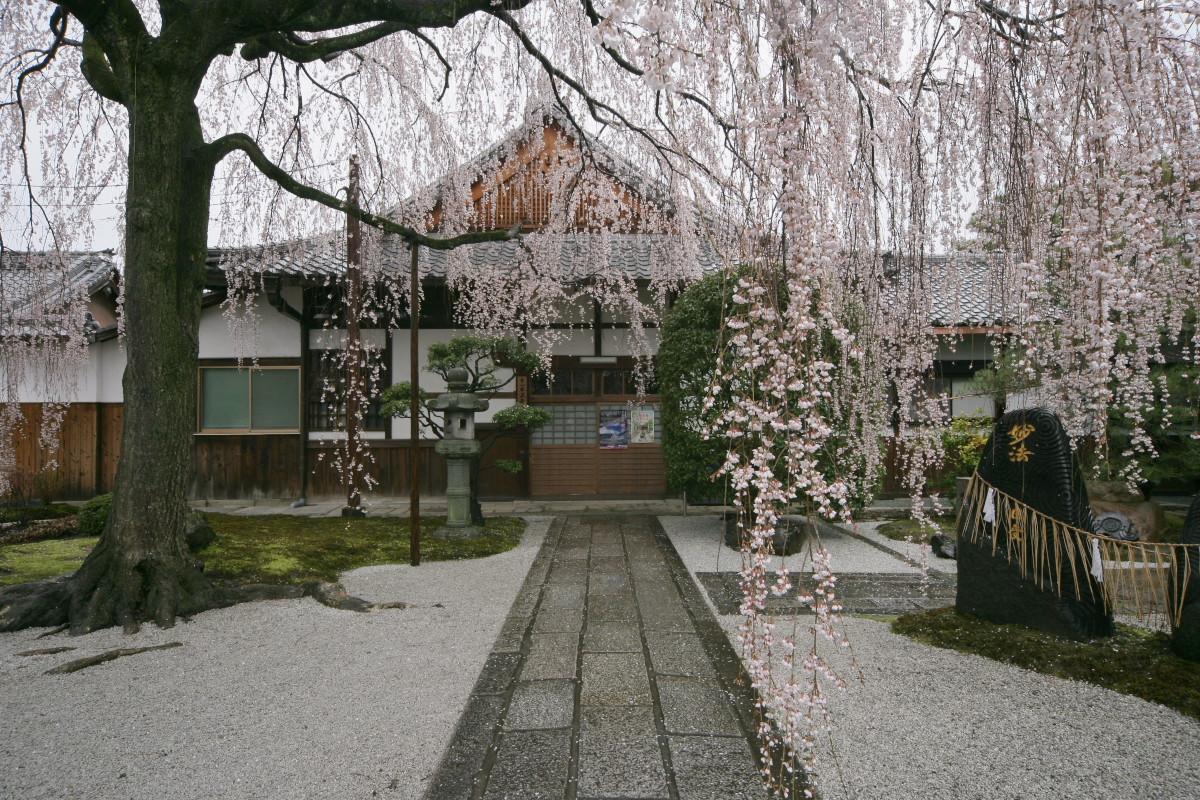 京都 本満寺  1_f0021869_2124224.jpg