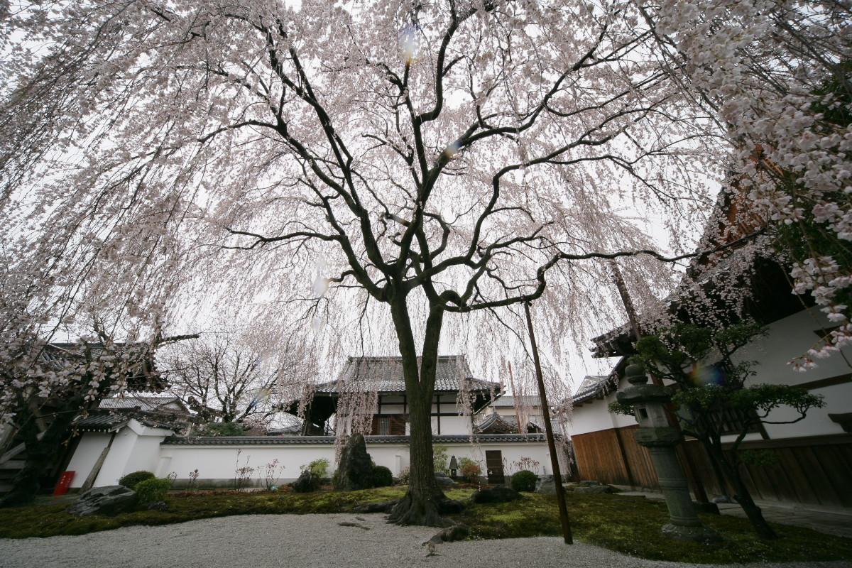 京都 本満寺  1_f0021869_214307.jpg