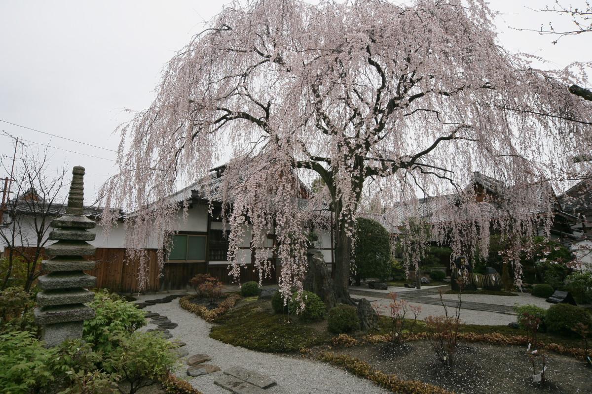 京都 本満寺  1_f0021869_2154985.jpg