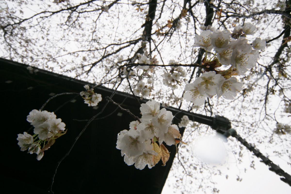 京都 本満寺  1_f0021869_2162446.jpg
