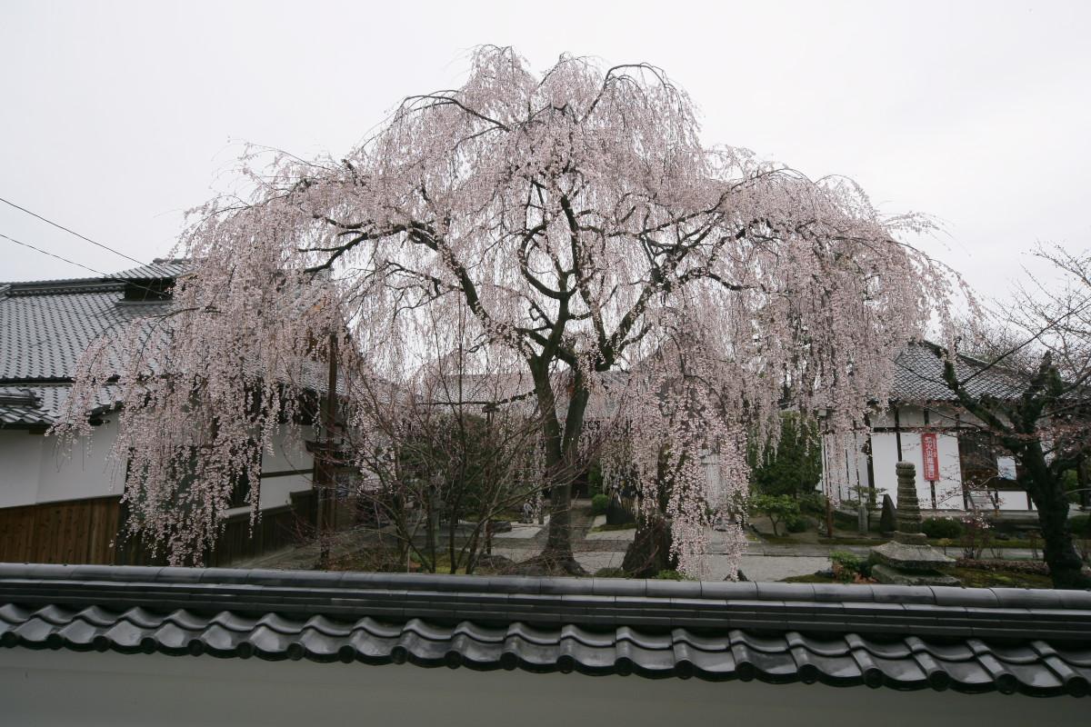 京都 本満寺  1_f0021869_2165923.jpg
