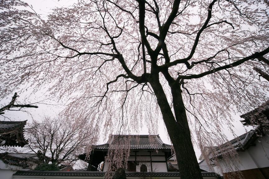 京都 本満寺  1_f0021869_2174041.jpg
