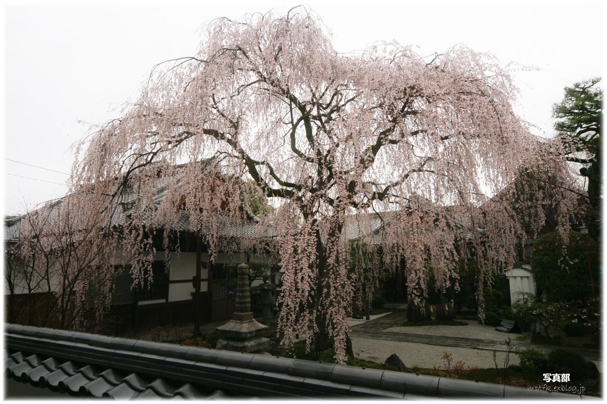 京都 本満寺  1_f0021869_22583594.jpg