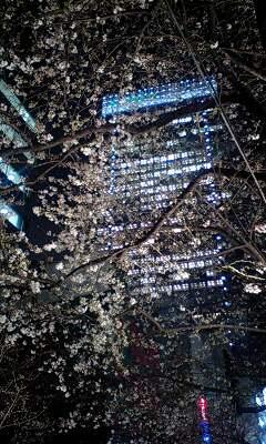 東京夜桜_a0095470_23592088.jpg