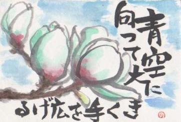 白木蓮の花_a0033474_21371879.jpg