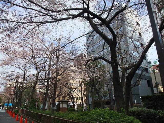 桜の通り道2010_b0151300_14112330.jpg