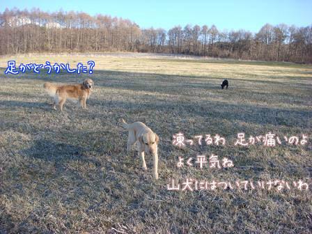 f0064906_20114763.jpg