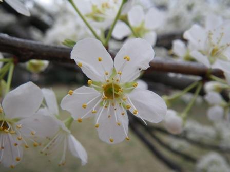 花盛り_b0049307_10265413.jpg