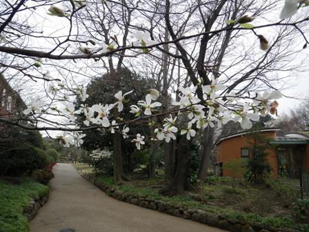 花盛り_b0049307_10271170.jpg