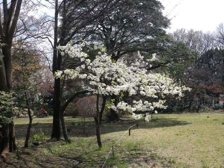 花盛り_b0049307_10274953.jpg