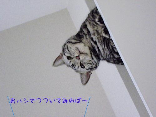 c0211109_183510.jpg