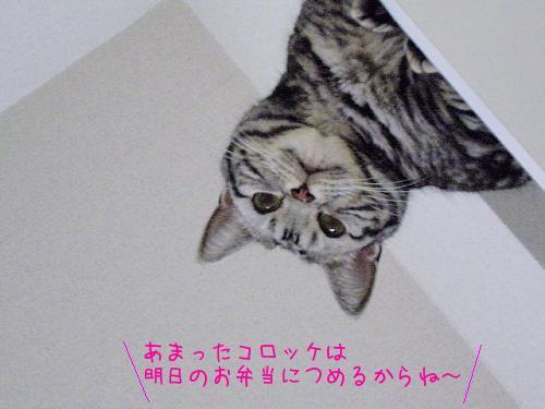 c0211109_195329.jpg