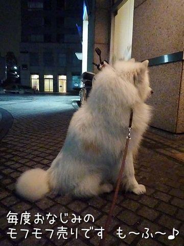夜桜モフモフ売り_c0062832_17145627.jpg
