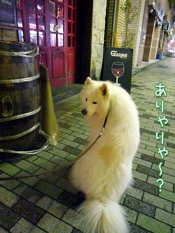 夜桜モフモフ売り_c0062832_17151466.jpg