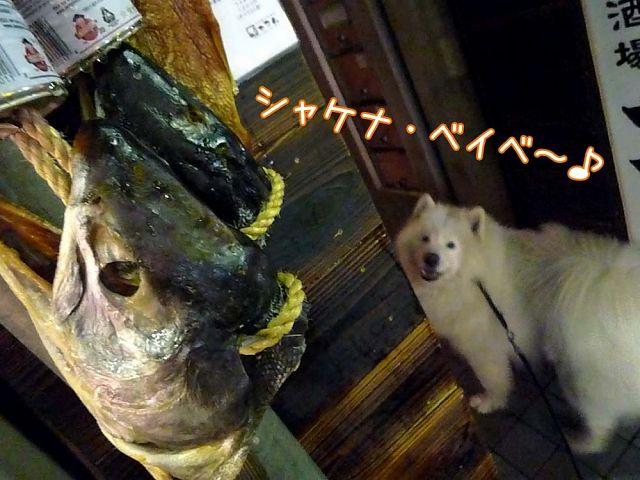 夜桜モフモフ売り_c0062832_17152972.jpg