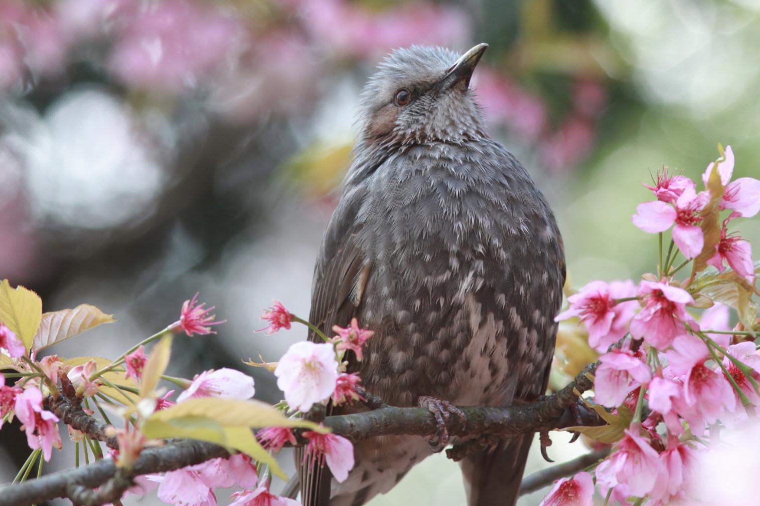 国木田独歩 春の鳥 - aozora.gr.jp