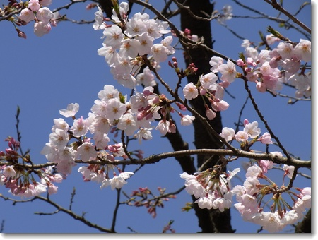 変化の春_c0147448_20285179.jpg