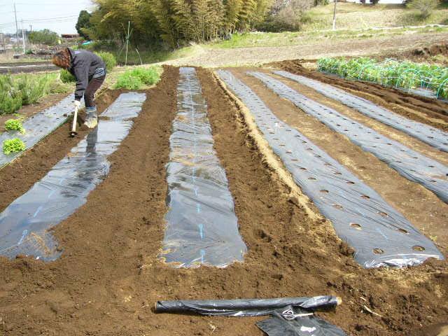 ズッキーニの畝・・・トマトの畝_c0222448_14272355.jpg