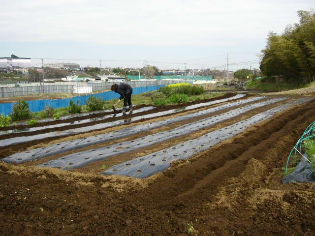 ズッキーニの畝・・・トマトの畝_c0222448_14274037.jpg