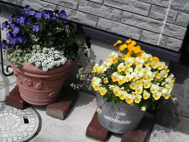 春は何処から来るのでしょう?_c0185356_178317.jpg