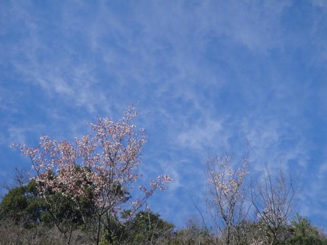 孝子の森の初春_c0108460_0114377.jpg