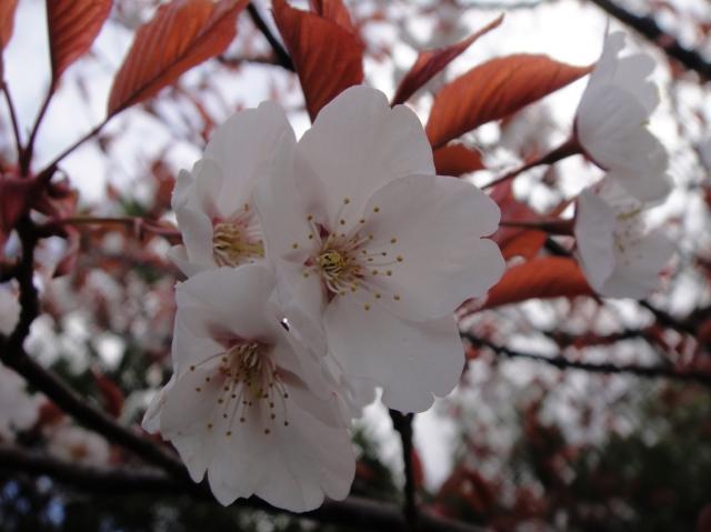 孝子の森の初春_c0108460_0124245.jpg