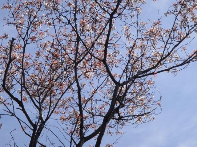 孝子の森の初春_c0108460_012766.jpg