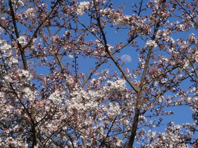 孝子の森の初春_c0108460_013062.jpg
