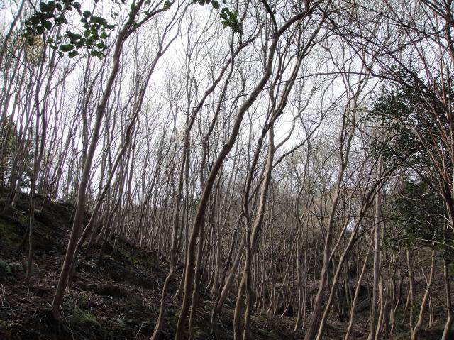 孝子の森の初春_c0108460_0184396.jpg