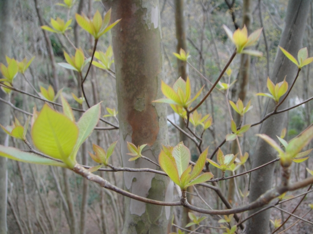 孝子の森の初春_c0108460_019288.jpg