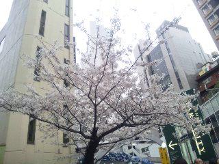 桜_b0181865_22512524.jpg