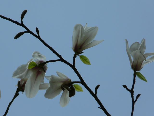 神代植物公園の樹木の花_e0145782_720315.jpg