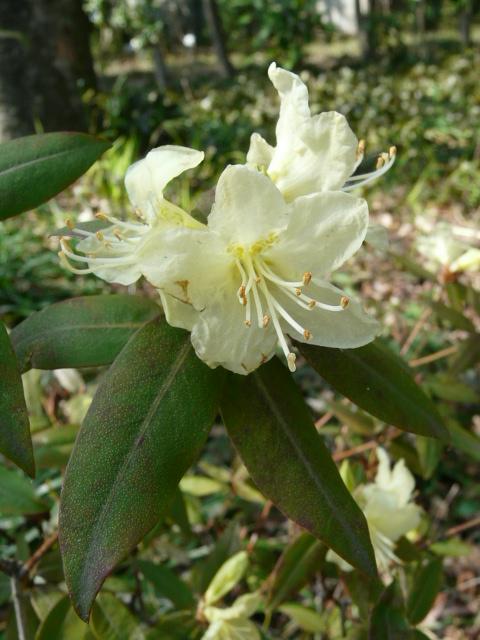 神代植物公園の樹木の花_e0145782_7211882.jpg