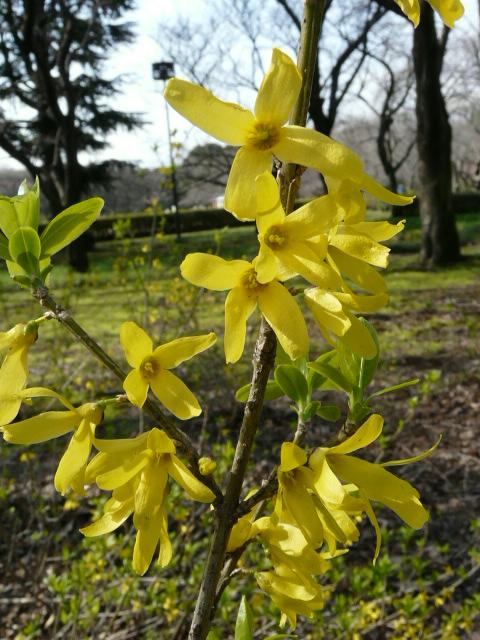 神代植物公園の樹木の花_e0145782_7214490.jpg