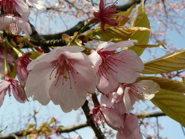 神代植物公園の樹木の花_e0145782_7222311.jpg