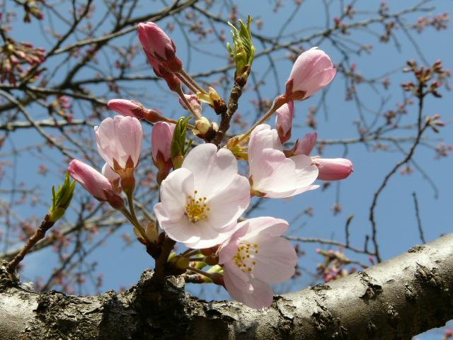神代植物公園の樹木の花_e0145782_7225185.jpg
